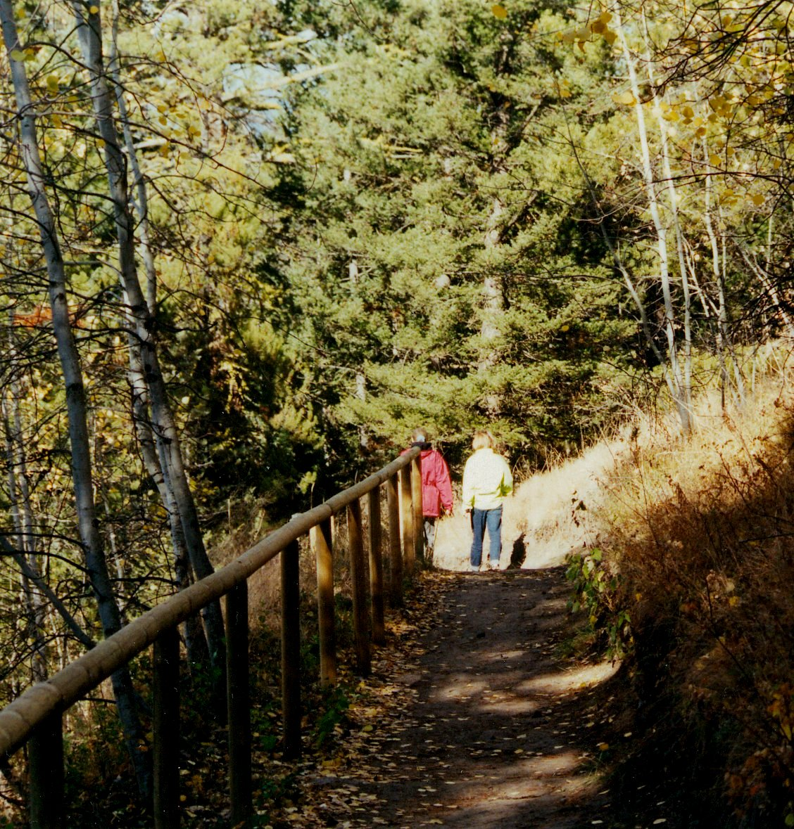 Walking Trails in Logan Lake